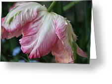 Tulip Perfection Greeting Card