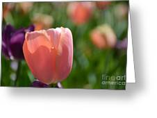 Tulip Pink Greeting Card