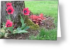 Tulip Poppie Greeting Card