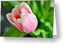 Tulip Portrait Greeting Card