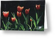 Tulip Red Flair Greeting Card