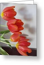 Tulip Shadow Greeting Card