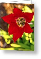Tulip Star Greeting Card