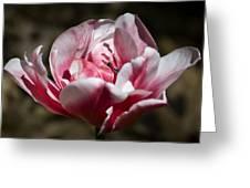 Tulip Surprise Greeting Card