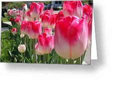 Tulip Time 2017 Greeting Card