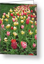 Tulip Time Trail Greeting Card