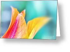 Tulip Tips Greeting Card