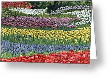 Tulip Tme Greeting Card