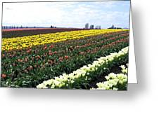 Tulip Town 11 Greeting Card