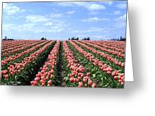 Tulip Town 12 Greeting Card