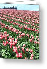 Tulip Town 14 Greeting Card