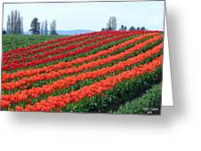 Tulip Town 18 Greeting Card
