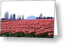 Tulip Town 3 Greeting Card