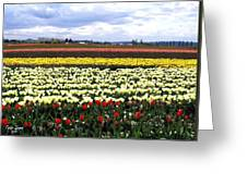 Tulip Town 4 Greeting Card