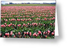 Tulip Town 5 Greeting Card