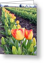 Tulip Town 6 Greeting Card
