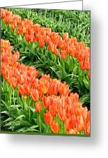 Tulip Town 7 Greeting Card