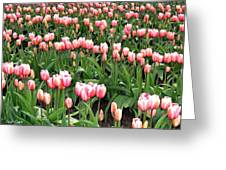 Tulip Town 8 Greeting Card