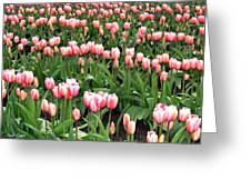 Tulip Town 8 Greeting Card