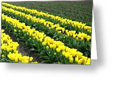 Tulip Town 9 Greeting Card