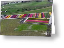 Tulip Town Aerial Greeting Card