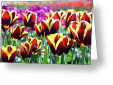 Tulip Treasures Greeting Card