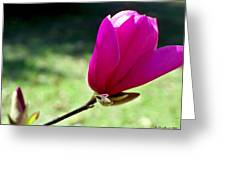 Tulip Tree Blossom Greeting Card