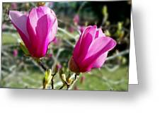 Tulip Tree Blossoms Greeting Card