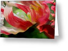 Tulip Wave And Ripple Greeting Card