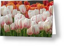 Tulip Wave Greeting Card