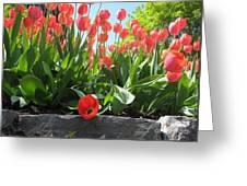 Tulipes Tulipe Greeting Card