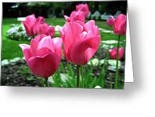 Tulipfest 3 Greeting Card