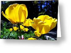 Tulipfest 5 Greeting Card