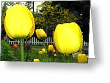 Tulipfest 8 Greeting Card