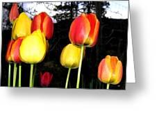 Tulipfest 9 Greeting Card