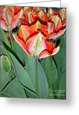 Tulips - A Bunch Of Beauties Greeting Card