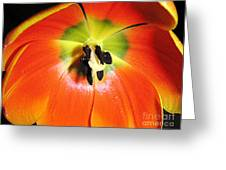 Tulips - An Inside Look Greeting Card