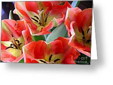 Tulips - Competing For Attention Greeting Card