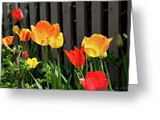 Tulips 1 Greeting Card