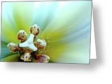 Tulips #12 Greeting Card