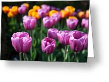 Tulips 14 Greeting Card