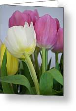 Tulips #2 Greeting Card