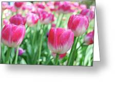 Tulips 2 Greeting Card