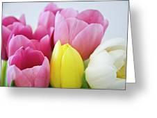 Tulips #3 Greeting Card