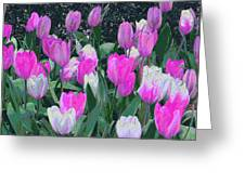 Tulips 327dp Greeting Card by Brian Gryphon