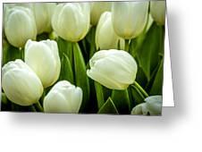 Tulips 4 Greeting Card