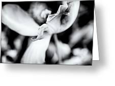 Tulips #4 Greeting Card