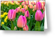 Tulips 6 Greeting Card