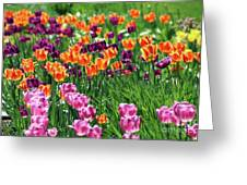 Tulips  6536 Greeting Card
