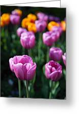 Tulips 7 Greeting Card